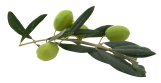Download Olives Latest Version 2018 PNG images