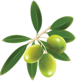 Collection Olives Clipart Png PNG images