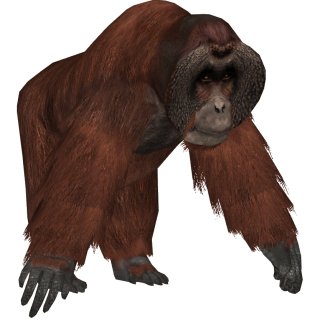 Big And Strong Orangutan Picture PNG images