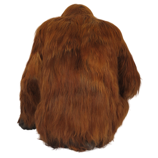 Looking Back Orangutan Picture PNG images