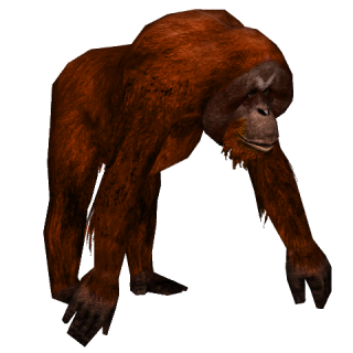 Transparent Background And Terrible Wild Orangutan PNG images