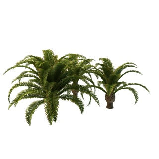 Long Palm Tree Clipart Png PNG images