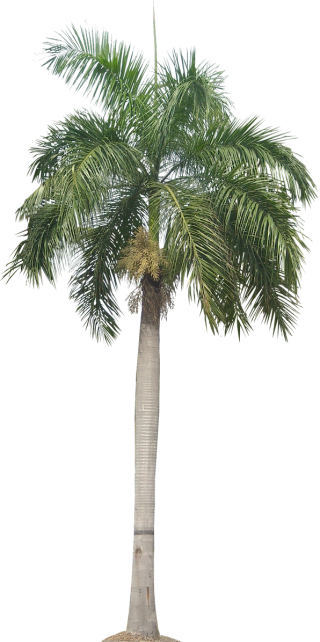 Palm Plant Png Tropical Plant Pictures Image PNG images