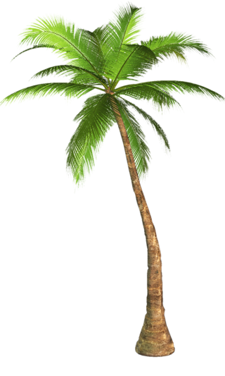 Palm Tree Transparent Background Image PNG images