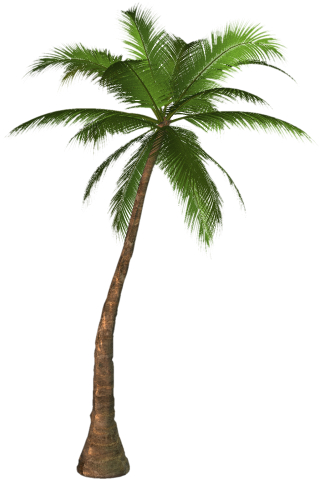 Transparent Palm Tree Background PNG images