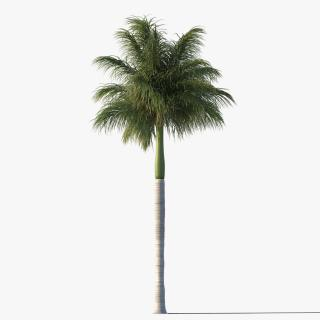 Use These Palm Tree Vector Clipart PNG images