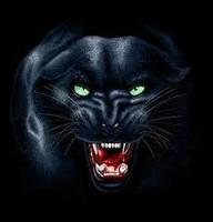 For Icons Windows Panther PNG images