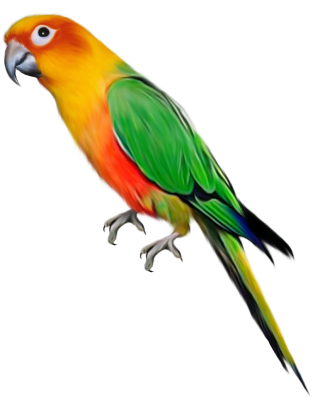 Vector Download Parrot Png Free PNG images