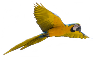 Browse And Download Parrot Png Pictures PNG images
