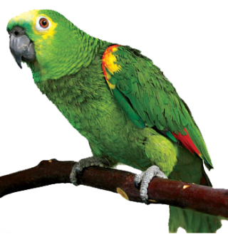 PNG Parrot HD PNG images