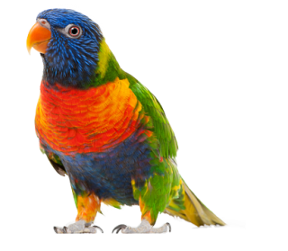 Parrot Pic PNG PNG images