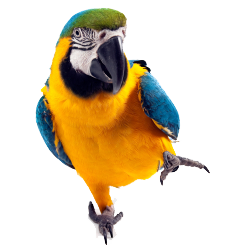 Parrot Picture Download PNG images