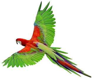 Parrot In Png PNG images