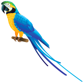 Png Clipart Collection Parrot PNG images