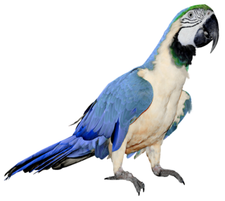 Parrot Png Clipart Collection PNG images