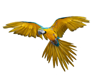Parrot Png Available In Different Size PNG images