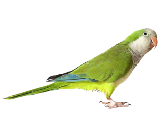 Download Icon Parrot Vectors Free PNG images