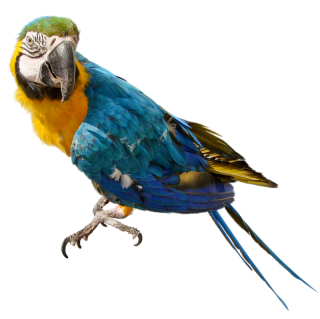 Parrot Background PNG images