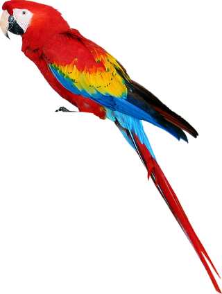 Free Download Parrot Png Vector PNG images