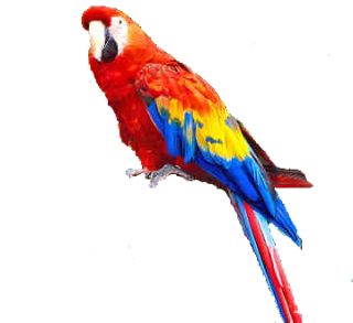 Download And Use Parrot Png Clipart PNG images