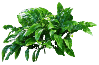 Green Plants Png Transparent PNG images