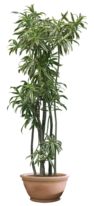 Plant Png Clipart PNG images
