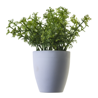 Plant Png Image, Potted Flower PNG images