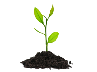 Plants Png PNG images