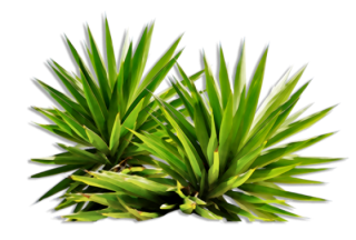 Png Plants Nature PNG images
