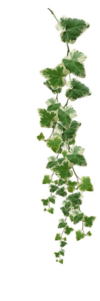 Vines Plants Png Pictures PNG images