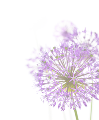 Free Elements: Free Purple Flower With Sage Brad Digi Scrapbook Flower PNG images