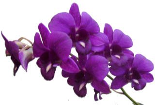 Purple Flower Frame Png Res Purple Flowers Png By PNG images