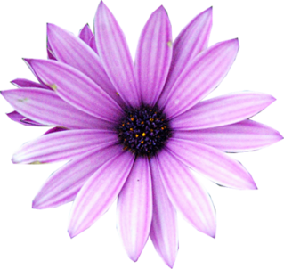 Purple Flower Png Available In Different Size PNG images