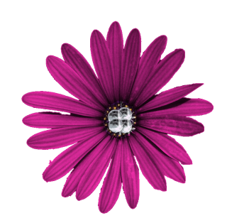 Purple Flower Png High-quality Download PNG images