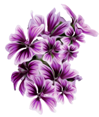 Purple Flower Png Purple Flower By Mircia90 PNG images