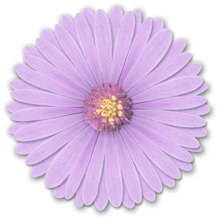Res Light Purple Flowers Png By Hanabell1 D6l6mwr Png PNG images