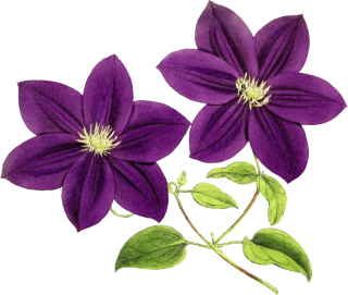 Res Purple Flowers Png By Hanabell1 D6l7m35 Png PNG images