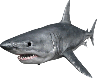 Browse And Download Shark Png Pictures PNG images