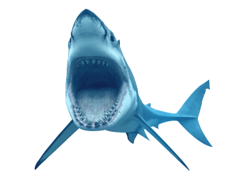 Animal Shark Transparent PNG images