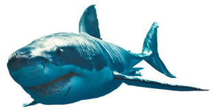 Great White Shark Photo Png PNG images