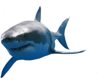 Great White Shark Png PNG images