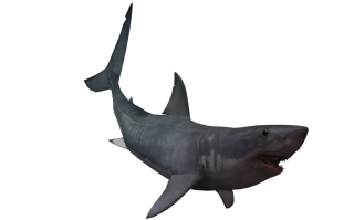 Real Shark Png PNG images