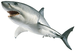 Download Free High-quality Shark Png Transparent Images PNG images
