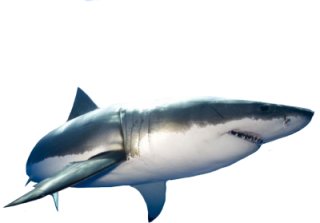 Png Format Images Of Shark PNG images