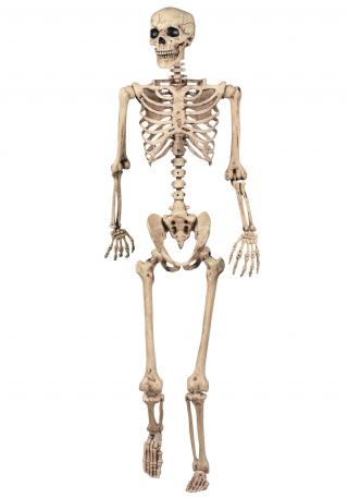 Lifesize Poseable Skeleton PNG images