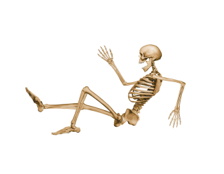 Vector Png Free Skeleton Download PNG images