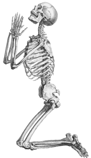 Skeleton, Skull And Transparent PNG images