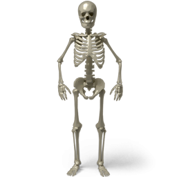 Standing Skeleton Icon PNG images
