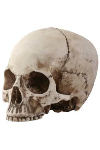 Naturally Skull Photo PNG images