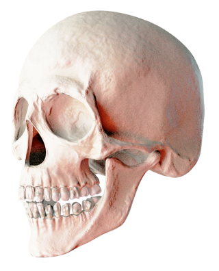 Sculptor Skull High Resolution Images PNG images